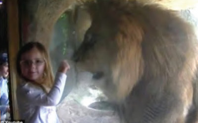 Talking with Lions and Swimming with Elephants. Being Brave and Courageous – Overcoming Fear through the Support of a Trusted Companion. Author: Robyn Lawrence